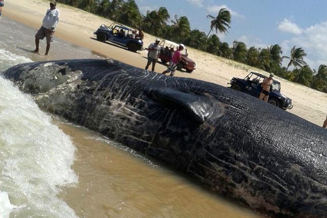 zz baleia 2