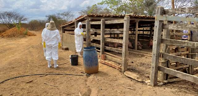 Resultado de imagem para IDIARN realiza ação de combate à peste suína no estado